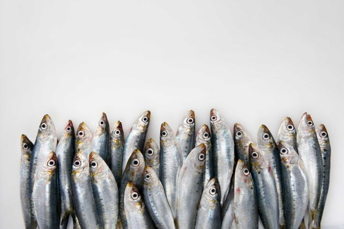 Pilchards, a great source of omega-3